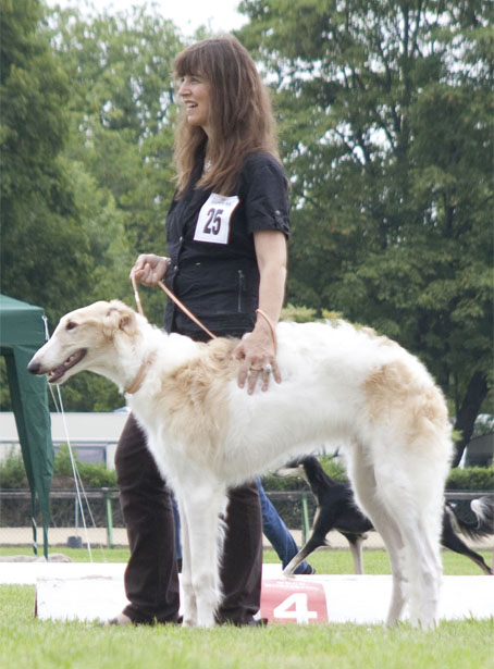 Borzois at CAC HIldesheim/D 28/07/12 Xanishka Borzoi