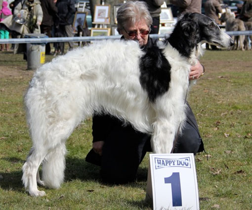 Borzois at CAC Hildesheim/D 06/04/13 Xanishka Borzoi
