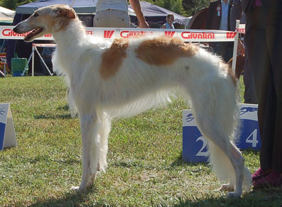 photo by European Borzoi