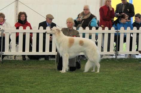 Birmingham Dog Show Borzoi Entries